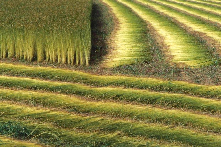 La valorisation des fibres végétales en matériaux de construction se s'organise de plus en plus. [©DR]