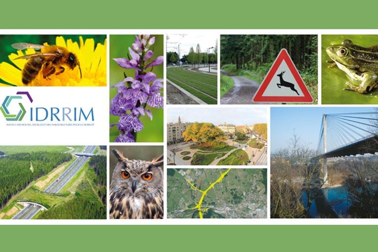"""L'édition 2020 du prix """"IMBP"""" organisé par l'Idrrim, est lancée [©Idrrim]"""