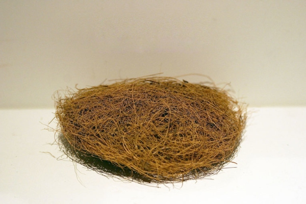 Définition fibre de coco