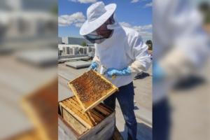 Vincent Puig, responsable d'application performance chez Arcade, est aussi l'apiculteur de l'éditeur de logiciels. [©Guillaume Cordel]