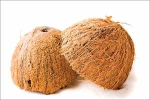 La fibre de coco, dans sa configuration d'origine, protection extérieure de la noix de coco. [©DR]