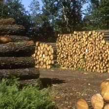 L'Auvergne-Rhône-Alpes soutient la filière bois-forêt
